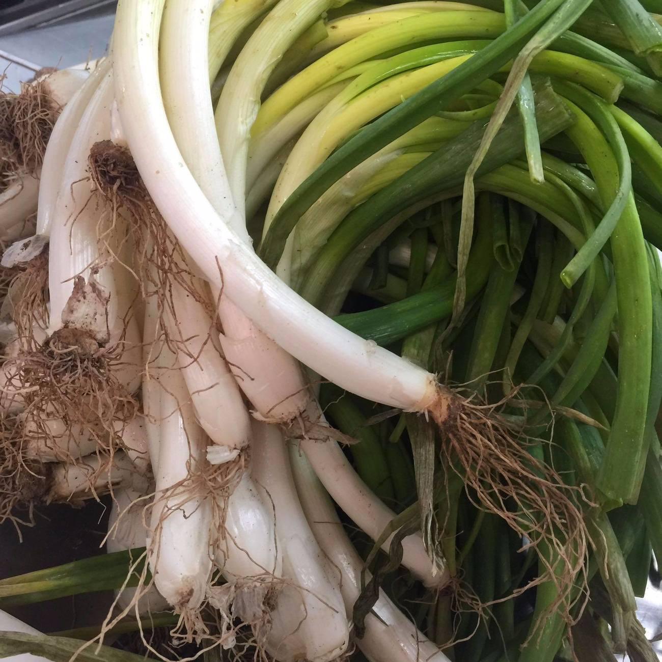 comer calcots en zaragoza: restaurante don fidel