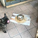 bares con perros en Zaragoza